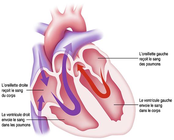 heart_pump