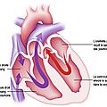 Rythme cardiaque et fa