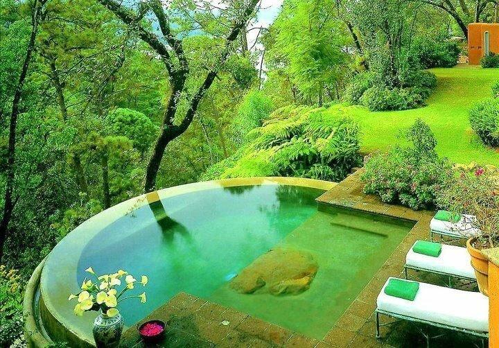 arbre piscine