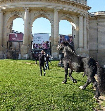 chevaux entier MVC