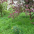 Kew gardens, avril 2014 - arbres en fleurs