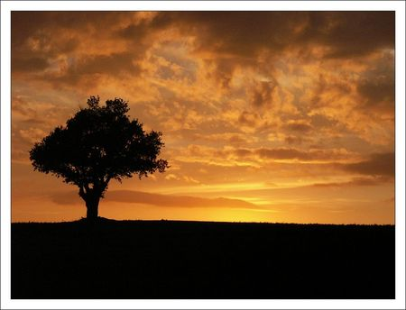 arbre_coucher_soleil_orange_1_3009