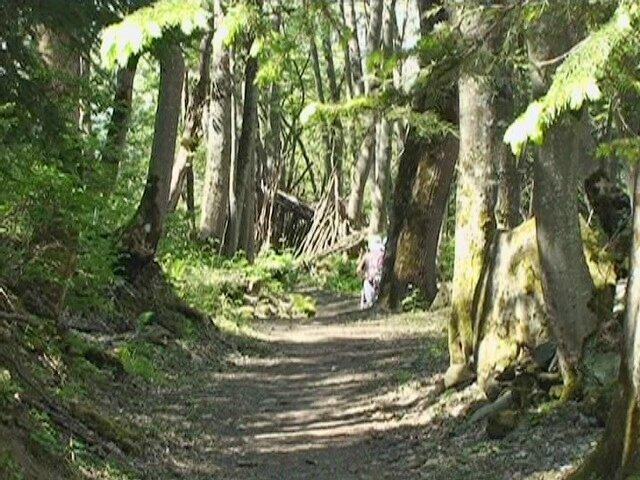Forêt Les Pâquiers