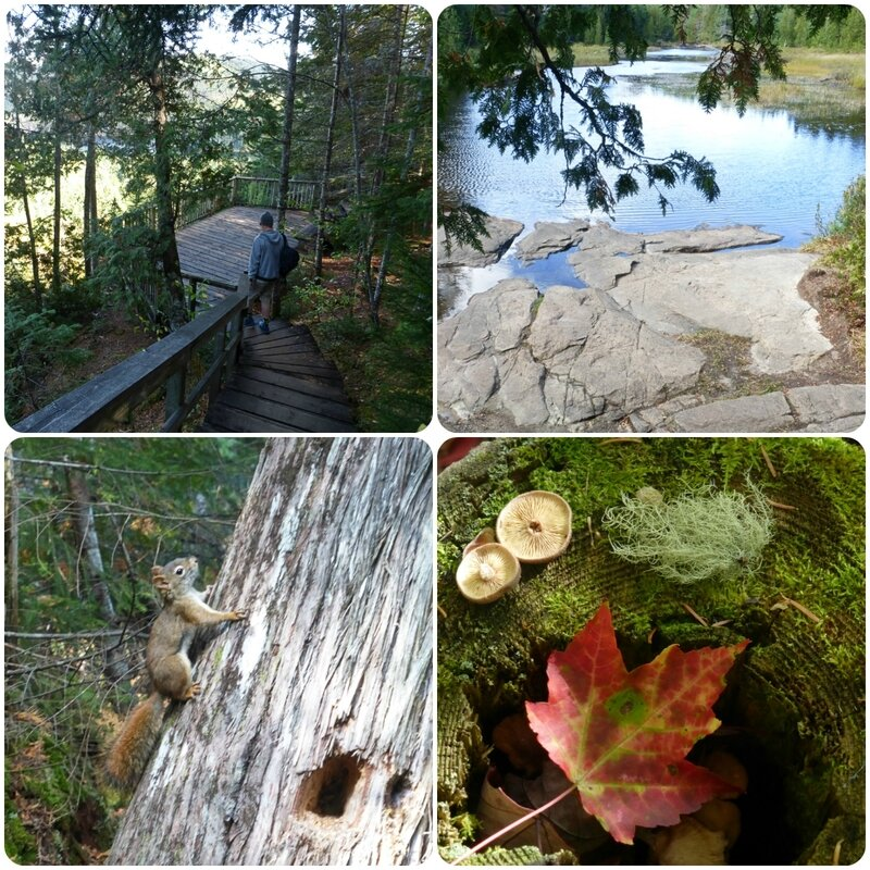 parcmauricie2
