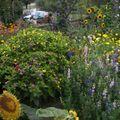 2009 08 25 Une partie de mes fleurs annuelles
