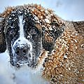 dog-in-the-snow