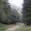 Path along river - Cheia Transylvania