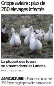 2021 01 16 SO Grippe aviaire plus de 280 élevages infectés
