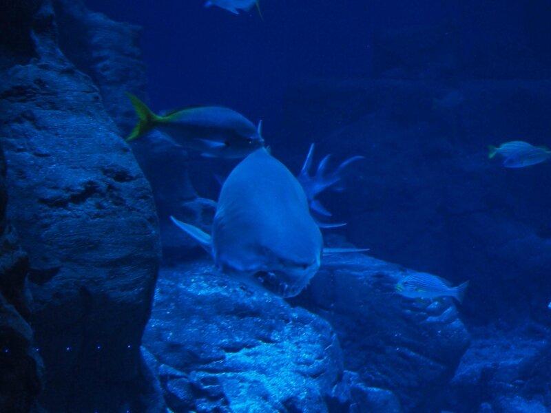6-aquarium-mare-nostrum-odysseum-montpellier-ma-rue-bric-a-brac