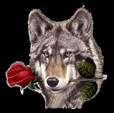 24012012-fleur-et-ruban-rouge
