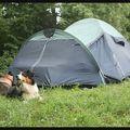 Les cerbères gardent la tente