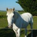 Mon cheval- mon ami - mon complice