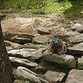 05 Les Marmottes (20)