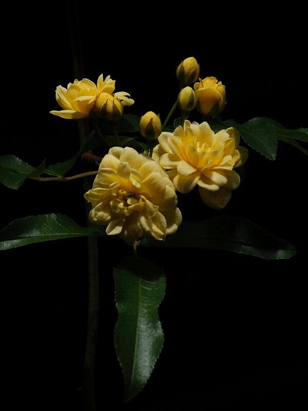 Bouquet jaune 2