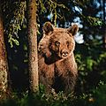 Câlin d'ours avec fred kipik, 5e inscrite