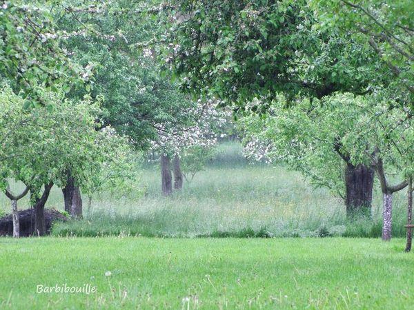 jardin20_Mai13