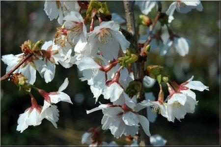 printempsb
