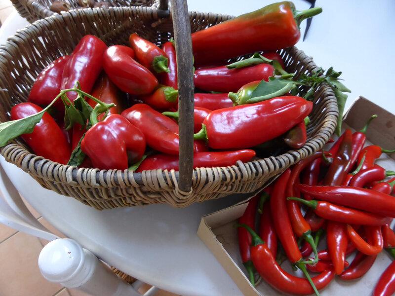 30-poivrons, piments (4)