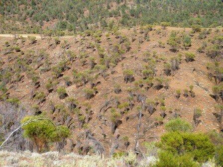 Australie Faune Flore Paysages - janvier 2005 (24)