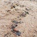 Sur le sable de Ko Tao, on en a plein les pieds, beurk !!!