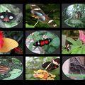 papillons de philippe