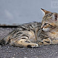 Photos JMP©Koufra 12 - Le Caylar - chat - chaton - 16072019 - 0009