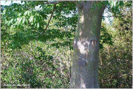 arbre_yeux
