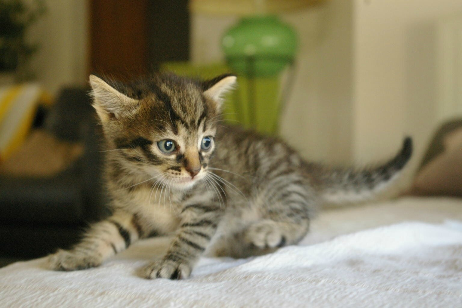 Supers Mignons Chatons A L Adoption Adoptes Les Sylvestres