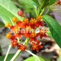 nicoya_cerro escondido_fleur au bord de rivière guarial_01