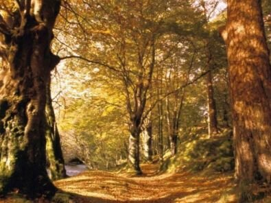 paysage_automne__1__m