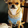 Manteau chien rayures bleu ciel_beige 3