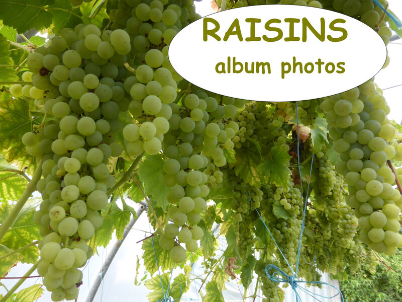 raisins - album photos