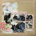 wallabys