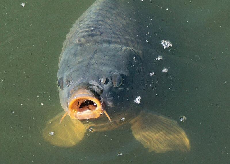 fish-1755473_960_720