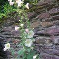 Dans notre jardin... des fleurs