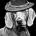 chien ciguarette