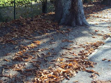 le_petit_jard_en_automne