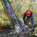 coupe oblique du bois restant, fibres tendues