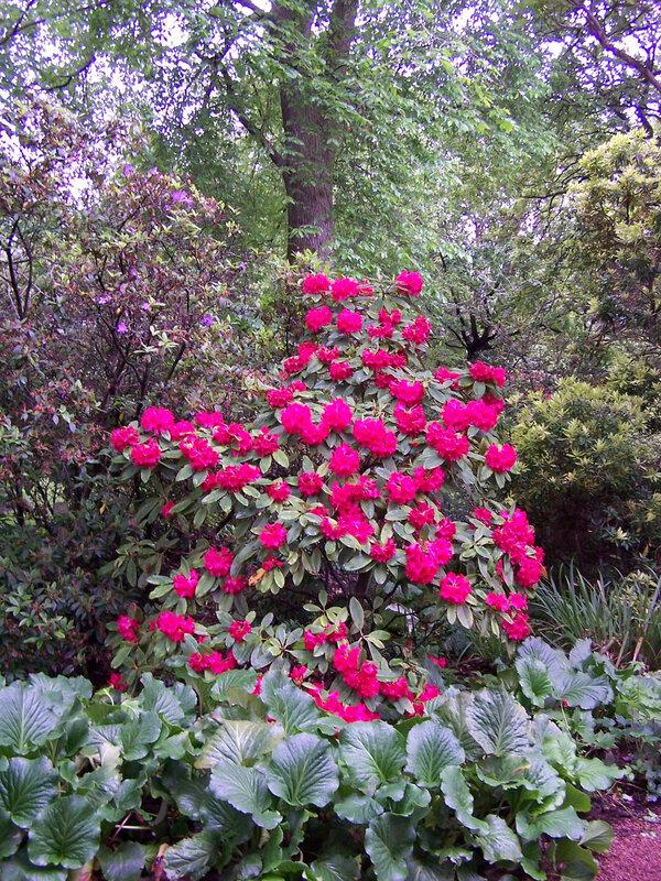 267-jardin-holyrood