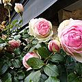 La vie en rose au fil de la nature & de mes creations
