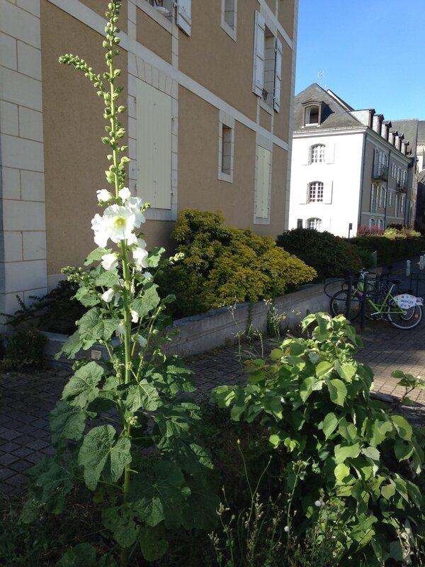 fleurs_en_libert_