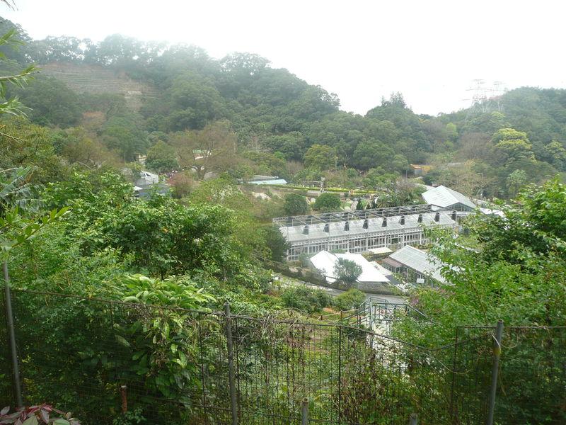 Kadoorie farm 029