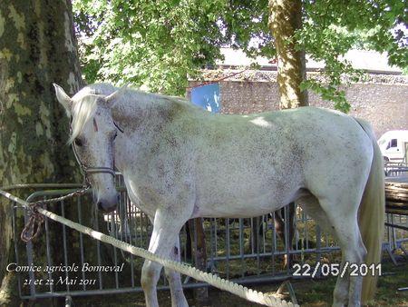Comice_agricole_2