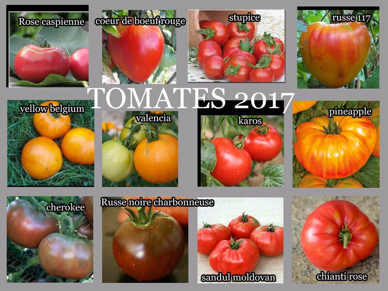 tomates 2 bis