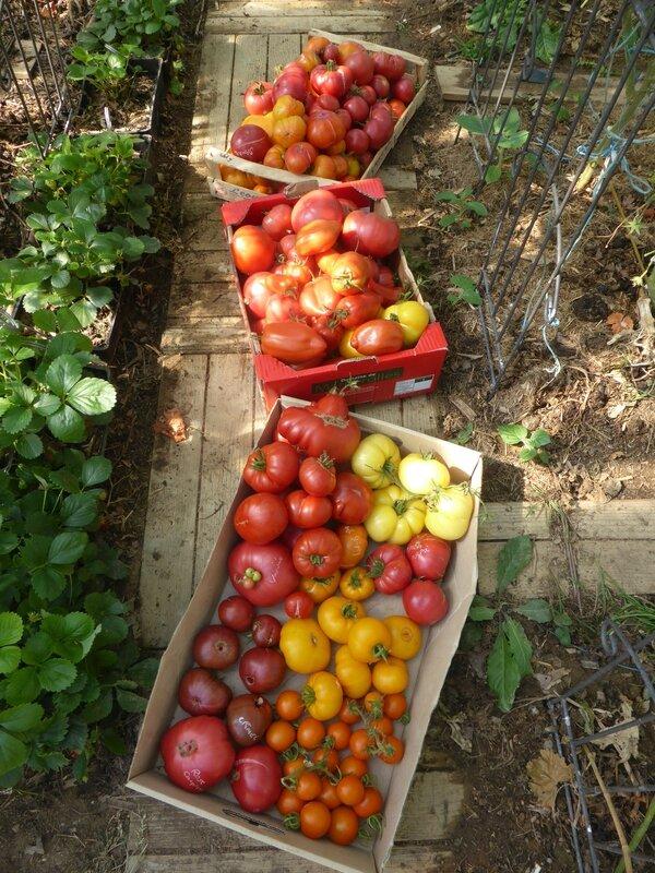 7-tomates (20)