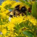 Nos fleurs et nos insectes