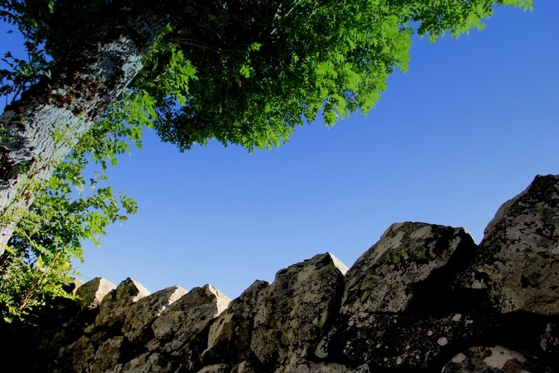 IMG_6961 muret pierres orgue basalte arbre et ciel B
