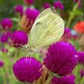 Butterfly (53)