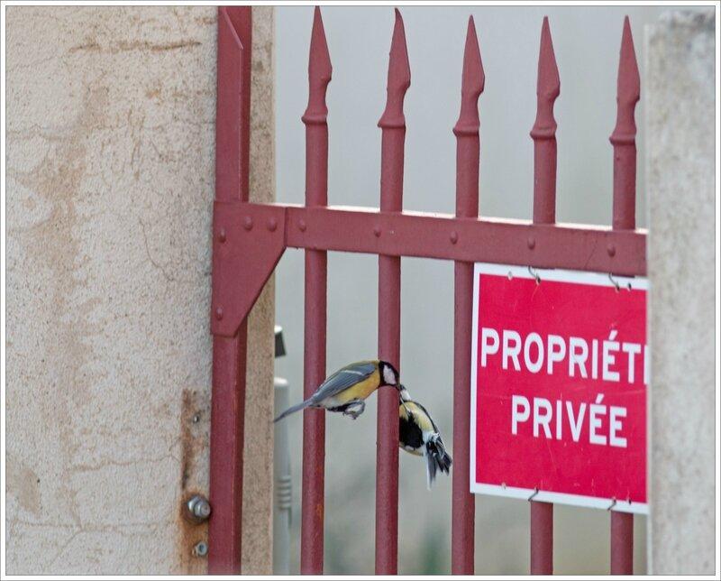 ville mésanges grille propriété privée 2 281216