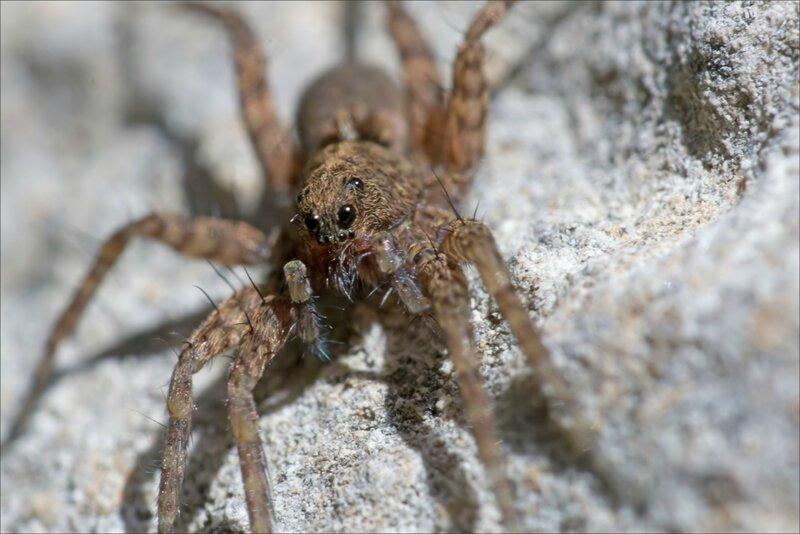 mur araignée face SM 2 290317